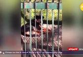 اقدام خنده دار باغ وحش چینی سوژه شد!+عکس