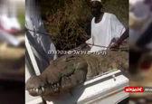 لحظه به دام انداختن تمساح ۵ متری+ویدئو