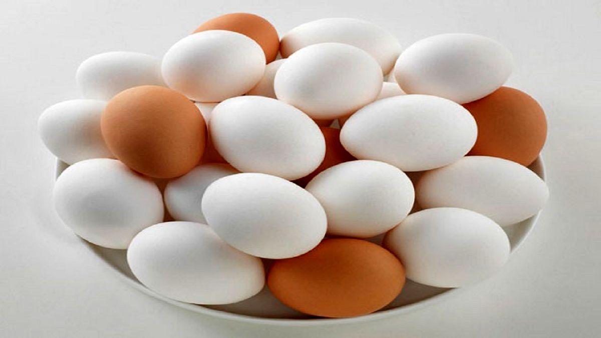 نرخ هر شانه تخم مرغ چند شد