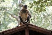 بلایی که میمون بر سر نوزاد ۵۰ روزه آورد! (۱۲+)