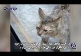 حمله حیرتانگیز گربه برای دفاع از فرزندانش+فیلم
