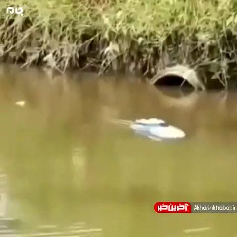 عجیب ترین مدل ماهیگیری!+ویدیو